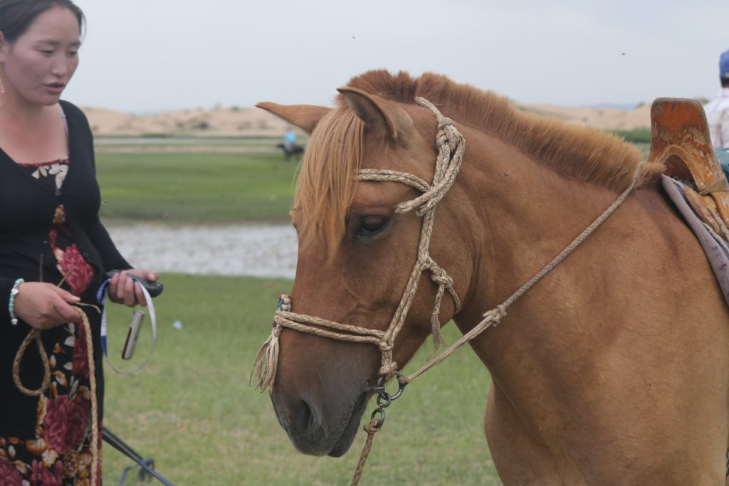Mongolian horse woman